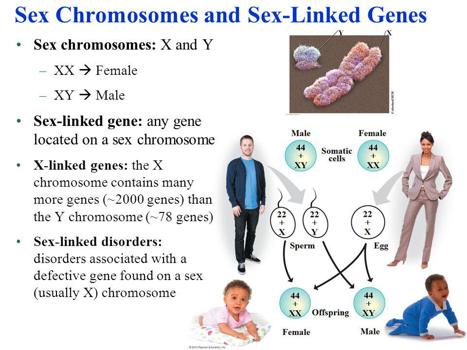 Sex Chromosomes and Sex-Linked Genes