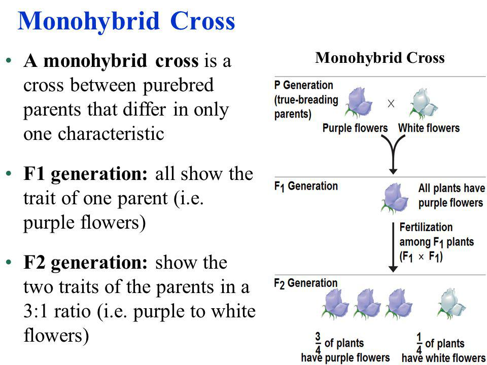 Monohybrid Cross A monohybrid cross is a cross between purebred parents that differ in only one characteristic.