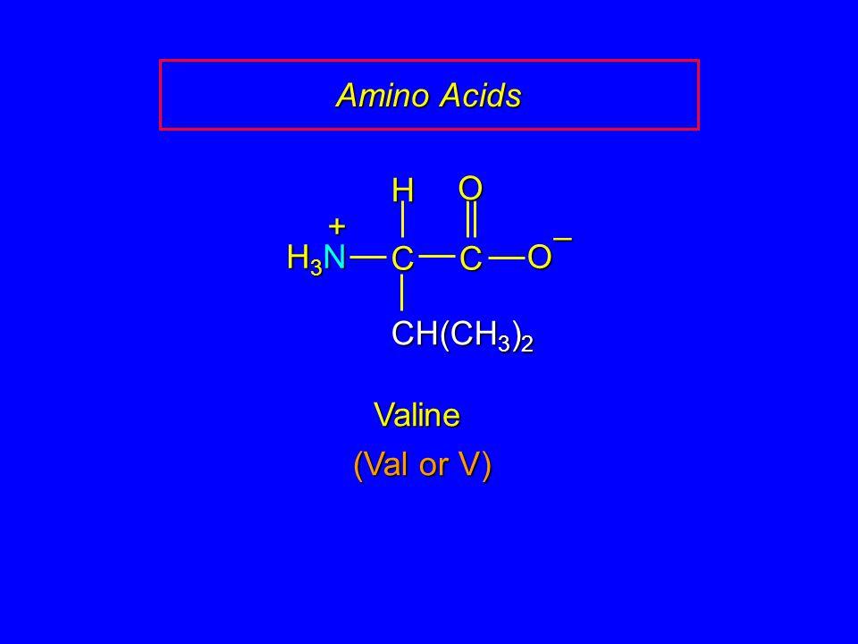 Amino Acids H O + – H3N C C O CH(CH3)2 Valine (Val or V)