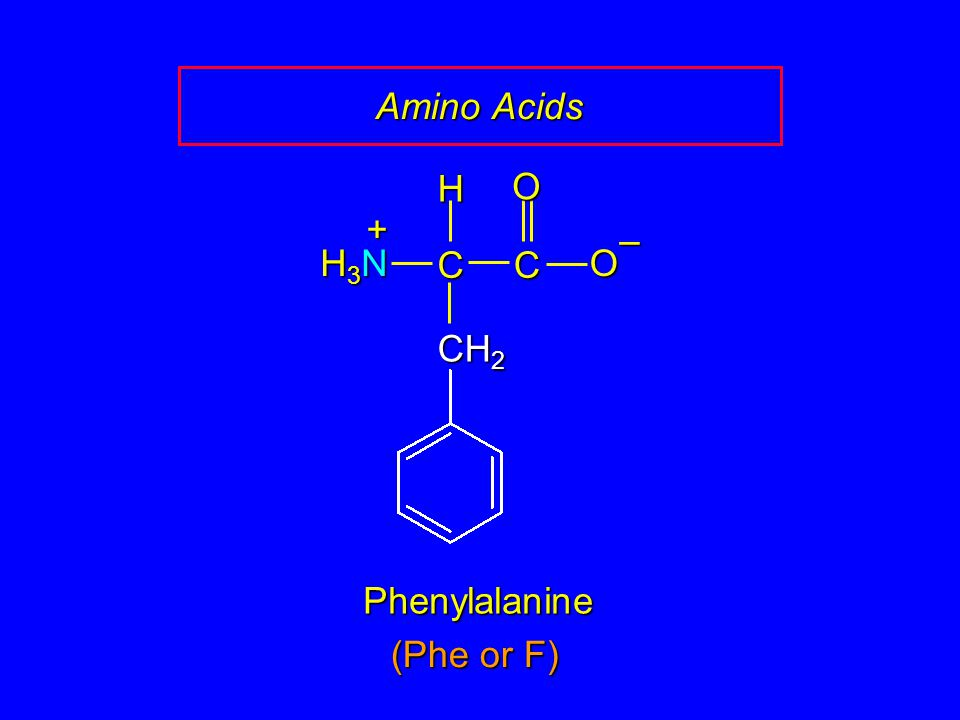 Amino Acids C O – CH2 H H3N + Phenylalanine (Phe or F)