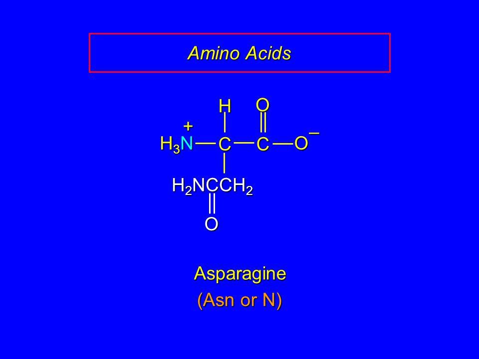 Amino Acids C O – H H3N + H2NCCH2 Asparagine (Asn or N)