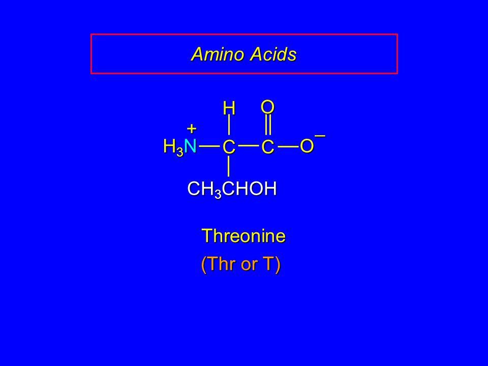 Amino Acids H O + – H3N C C O CH3CHOH Threonine (Thr or T)
