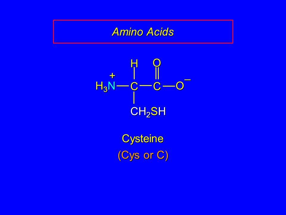 Amino Acids H O + – H3N C C O CH2SH Cysteine (Cys or C)