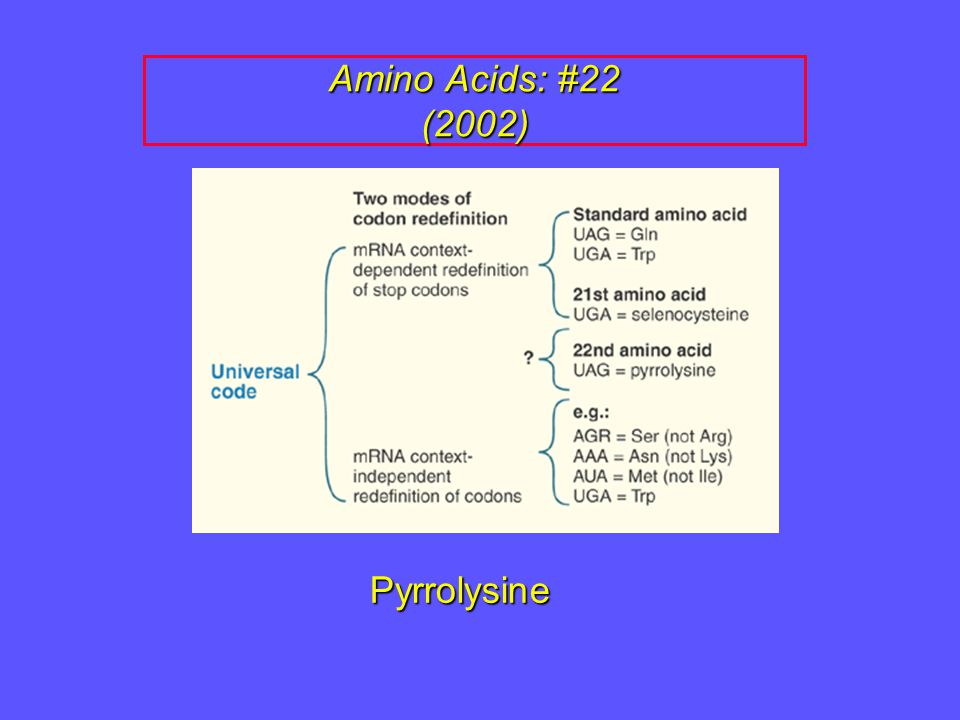 Amino Acids: #22 (2002) Pyrrolysine