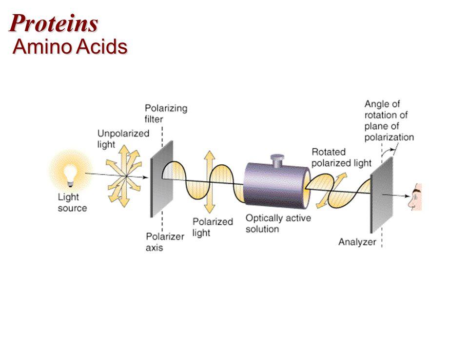 Proteins Amino Acids