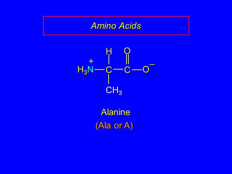 Amino Acids H O + – H3N C C O CH3 Alanine (Ala or A)