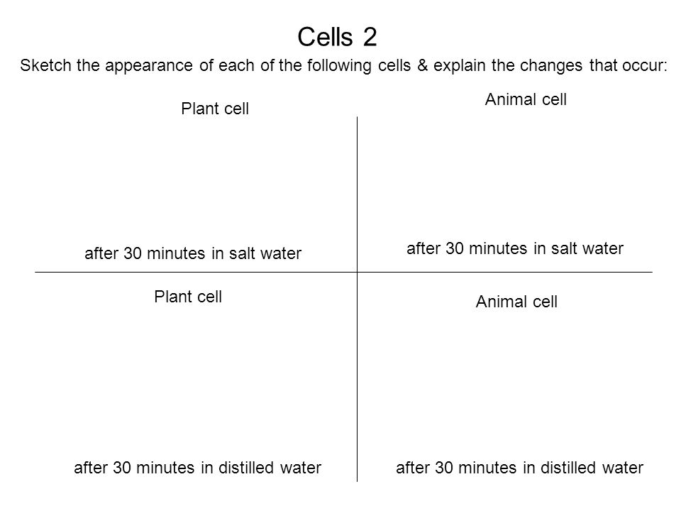 Cells 2 Sketch the appearance of each of the following cells & explain the changes that occur: Animal cell.