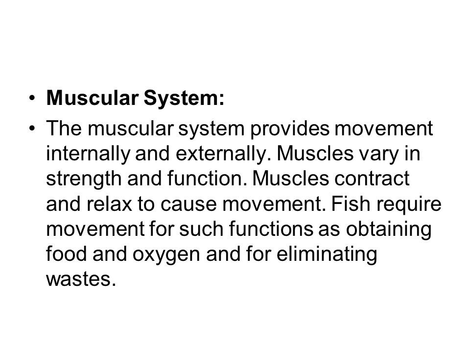 Muscular System: