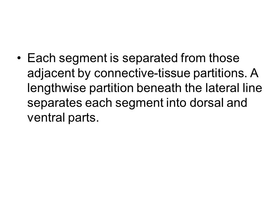 Each segment is separated from those adjacent by connective-tissue partitions.