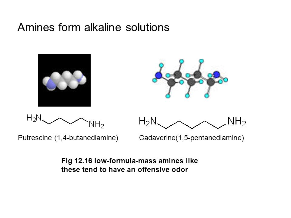 Amines form alkaline solutions