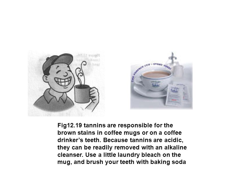 Fig12.19 tannins are responsible for the brown stains in coffee mugs or on a coffee drinker's teeth.