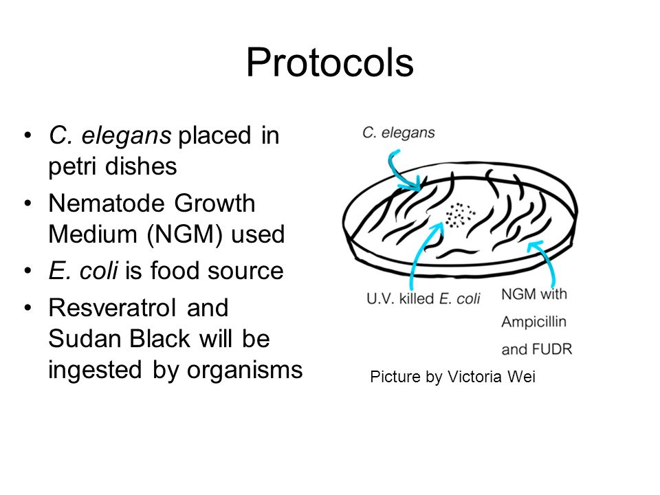Protocols C. elegans placed in petri dishes