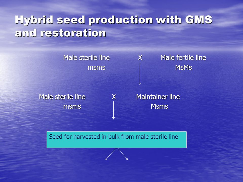 Hybrid seed production with GMS and restoration