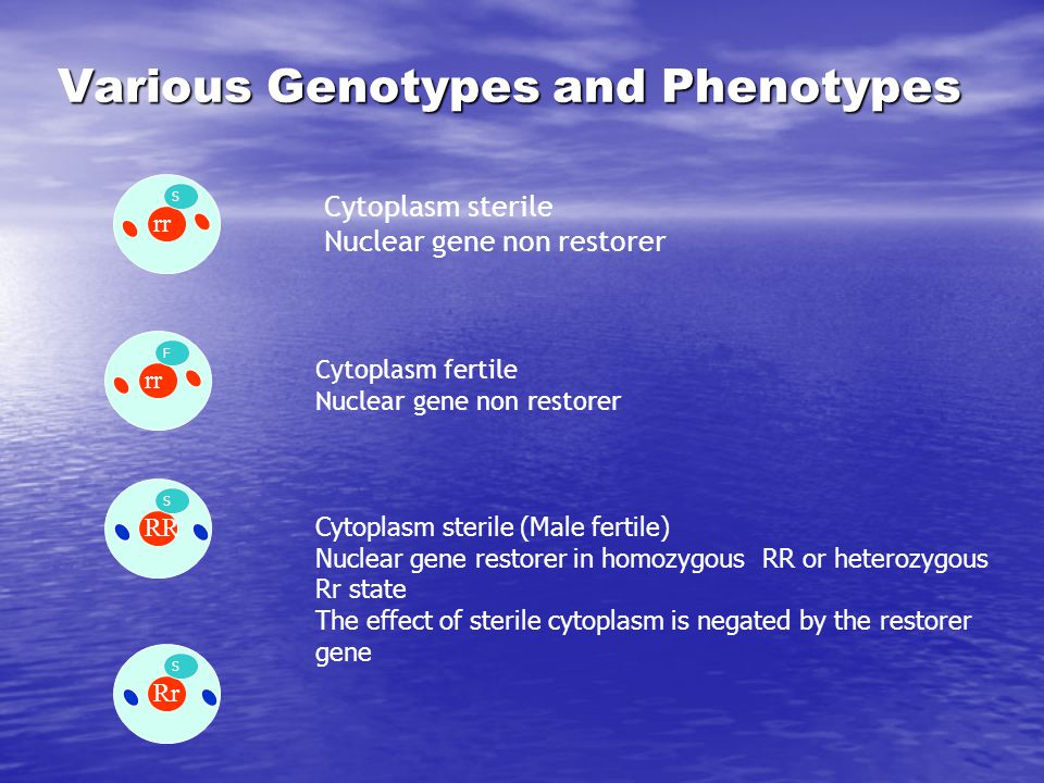 Various Genotypes and Phenotypes