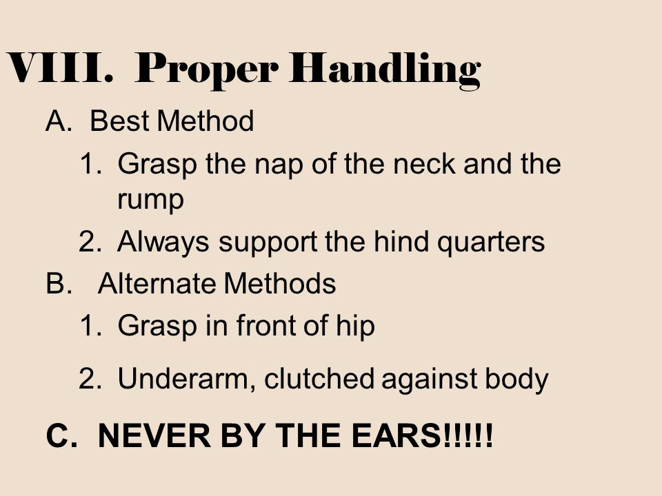 VIII. Proper Handling C. NEVER BY THE EARS!!!!! Best Method