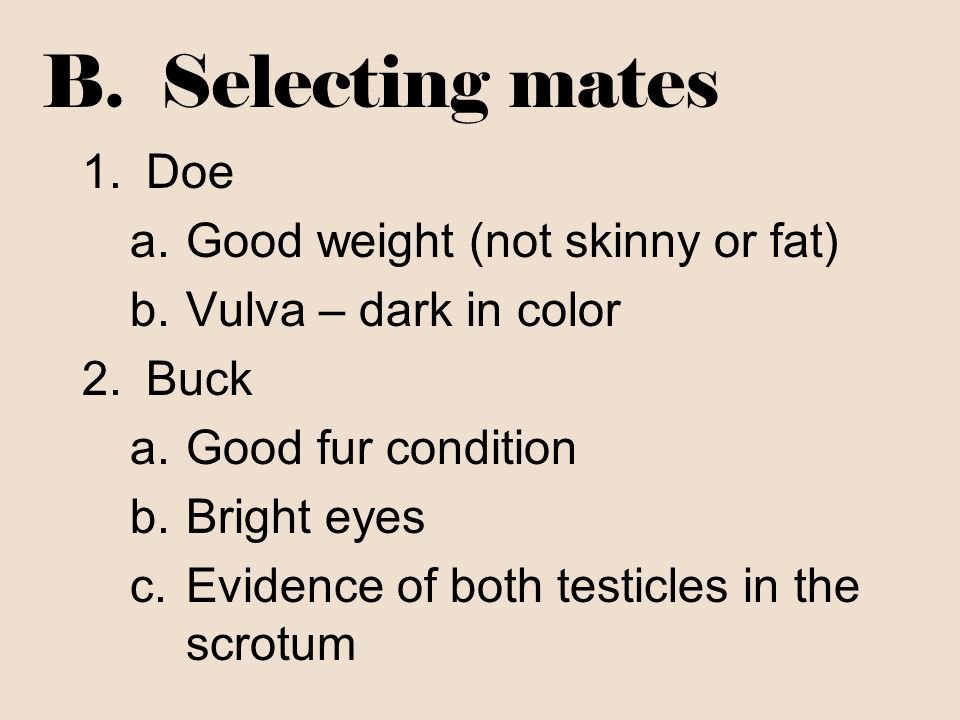 B. Selecting mates Doe Good weight (not skinny or fat)
