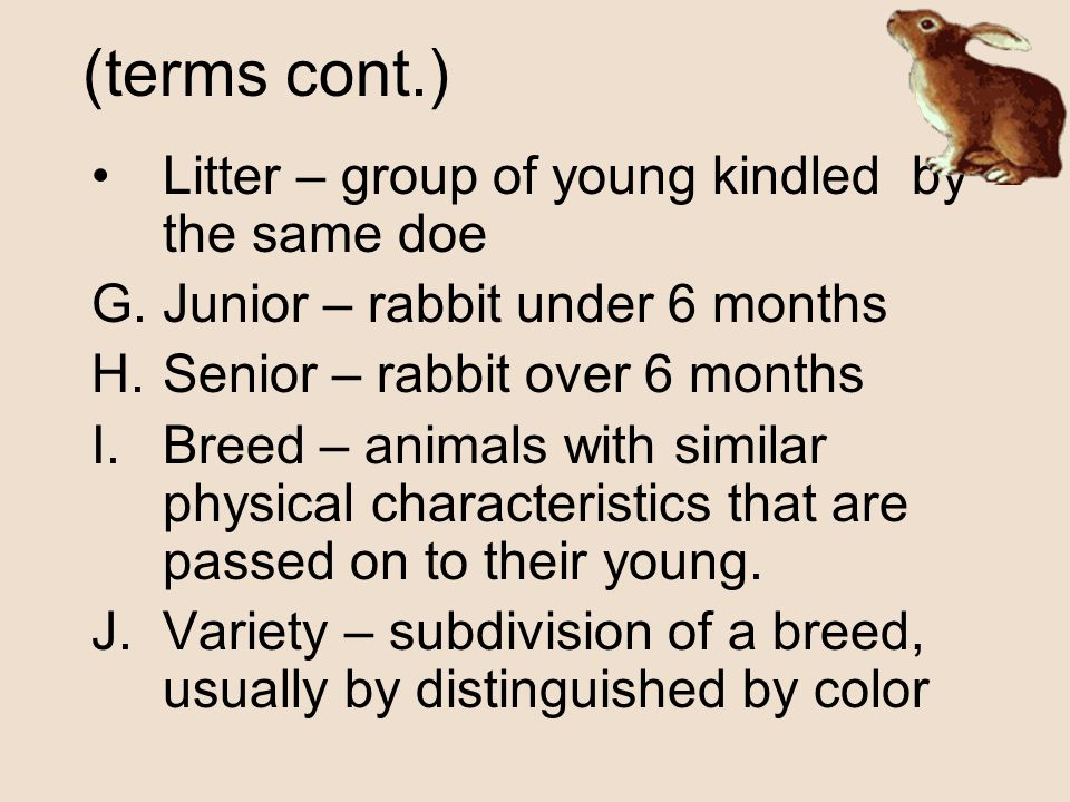 (terms cont.) Litter – group of young kindled by the same doe