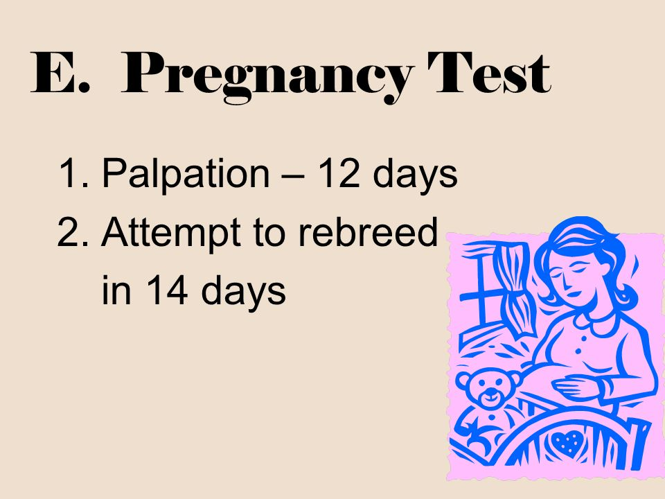E. Pregnancy Test Palpation – 12 days Attempt to rebreed in 14 days