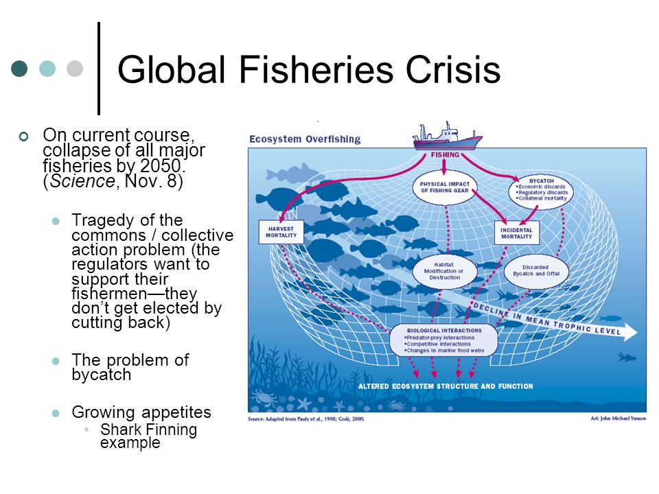 Global Fisheries Crisis
