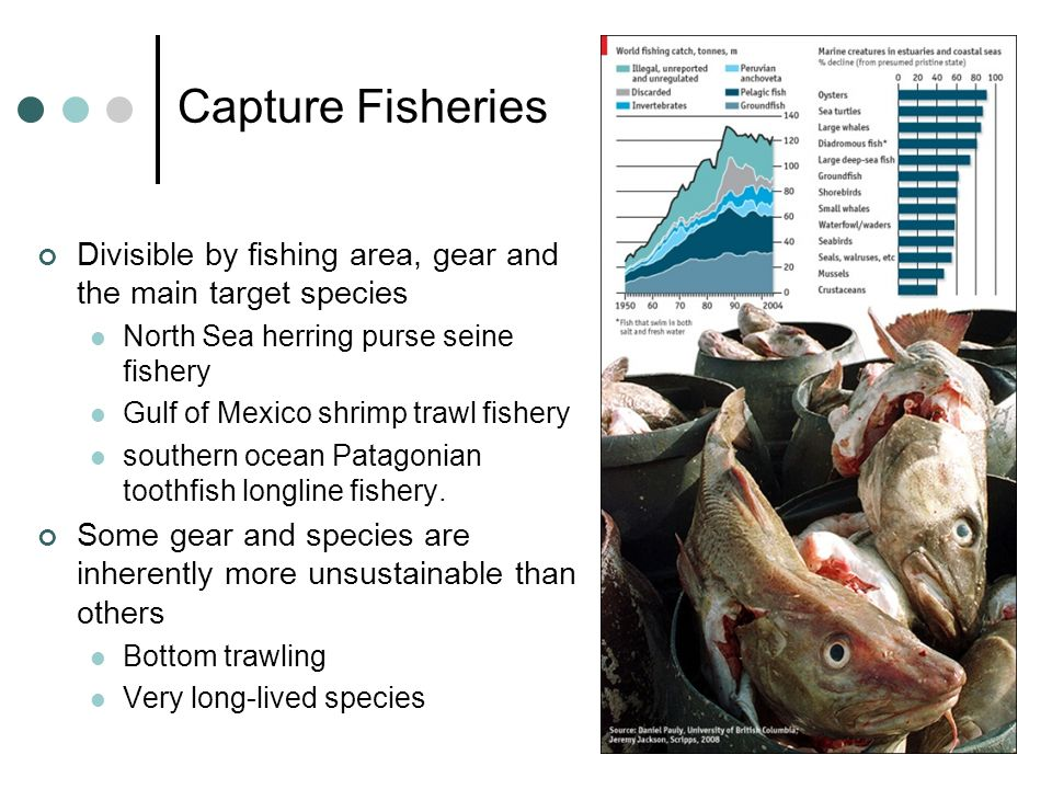 Capture Fisheries Divisible by fishing area, gear and the main target species. North Sea herring purse seine fishery.