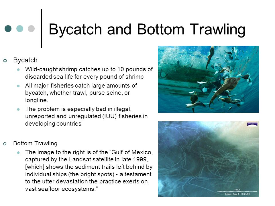 Bycatch and Bottom Trawling