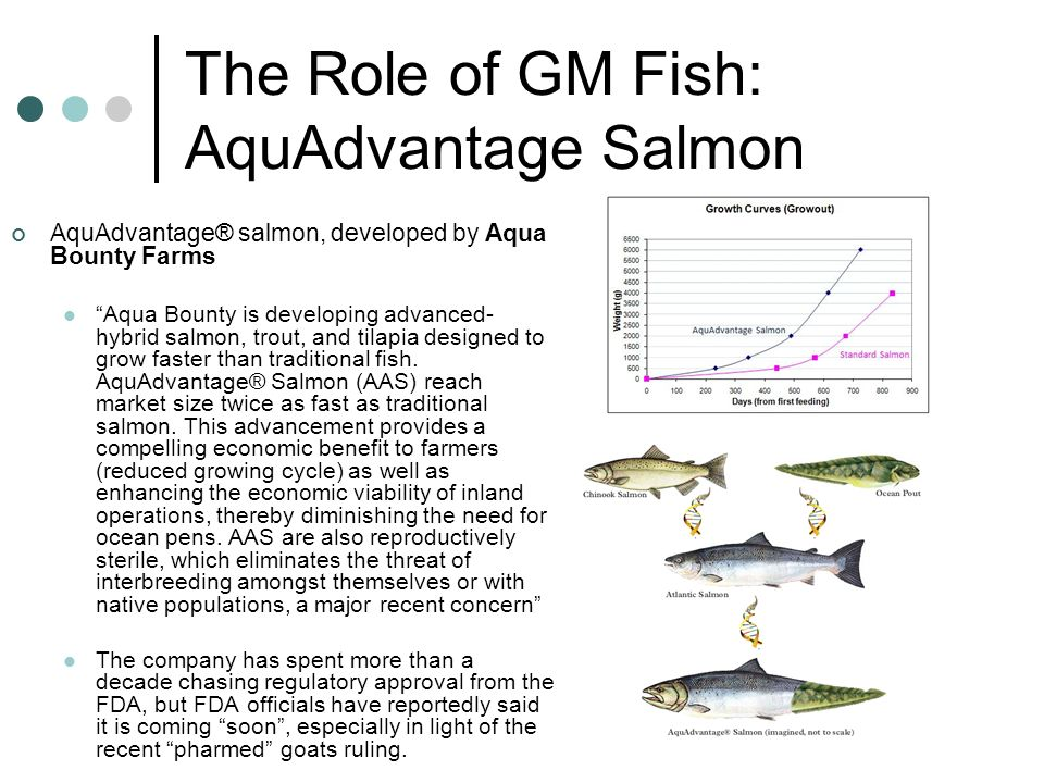 The Role of GM Fish: AquAdvantage Salmon