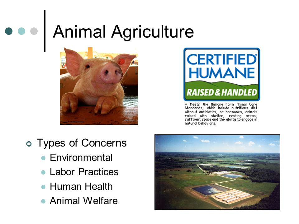 Animal Agriculture Types of Concerns Environmental Labor Practices