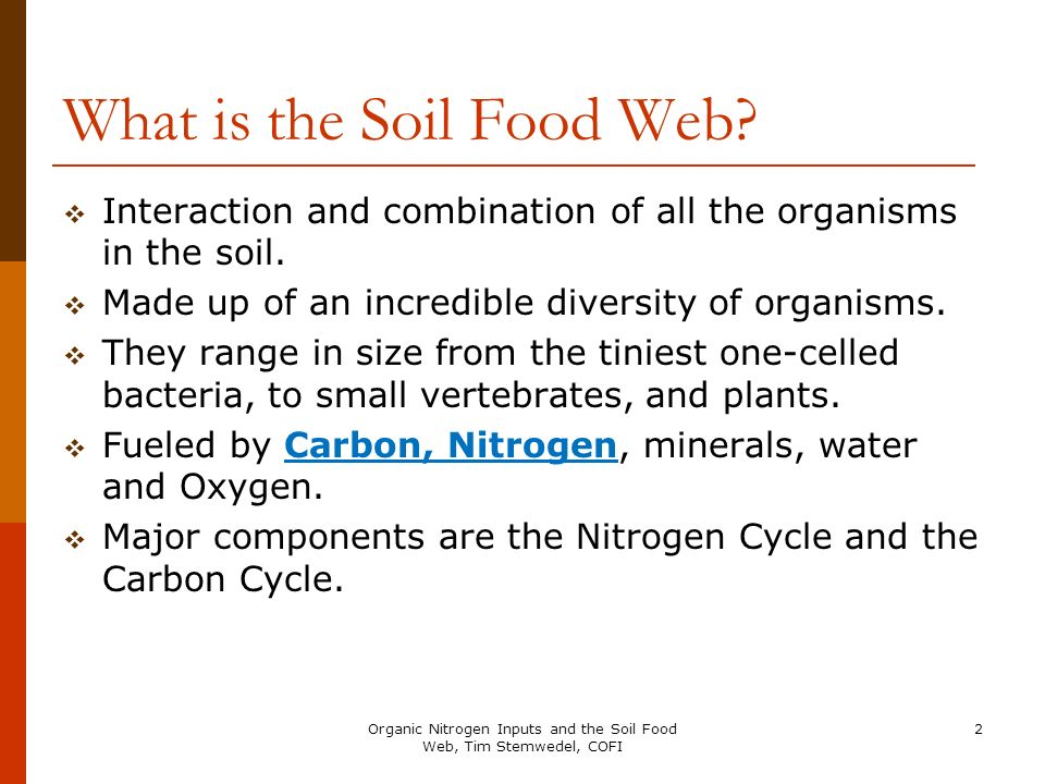 What is the Soil Food Web