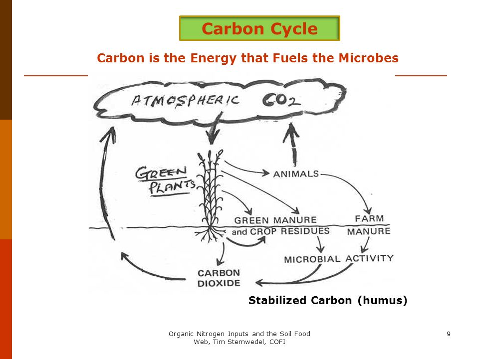 Carbon is the Energy that Fuels the Microbes