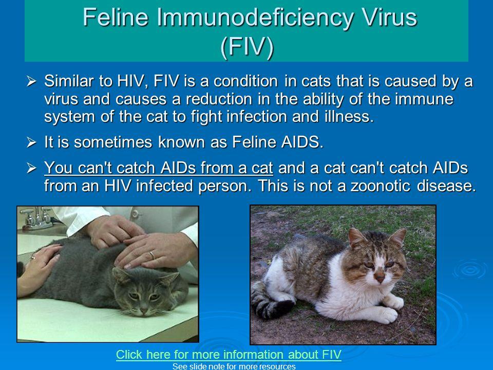 Feline Immunodeficiency Virus (FIV)