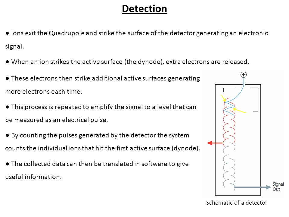 Detection ● Ions exit the Quadrupole and strike the surface of the detector generating an electronic signal.