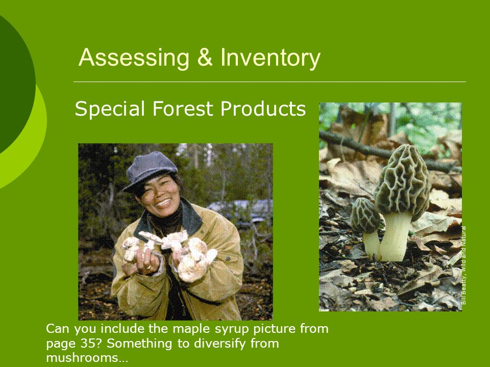 Assessing & Inventory Special Forest Products