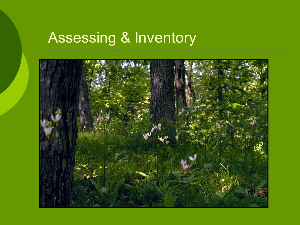 Assessing & Inventory Must also get a good assessment of the vegetative cover. This to consider: Forest types – tree cover.