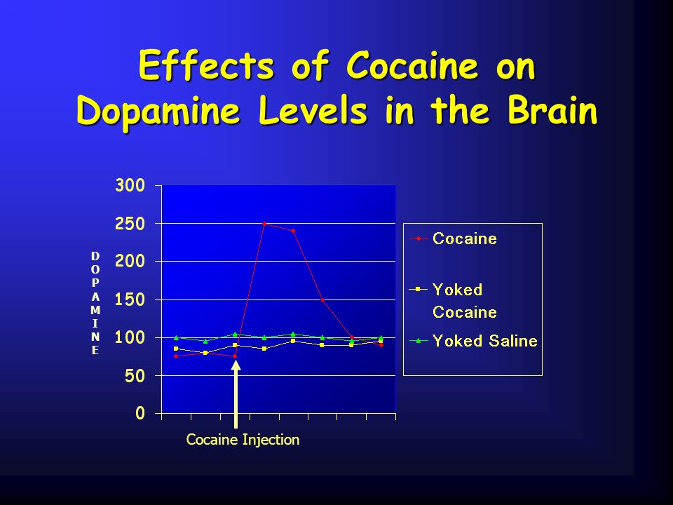 Effects of Cocaine on Dopamine Levels in the Brain