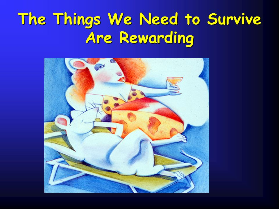 The Things We Need to Survive Are Rewarding