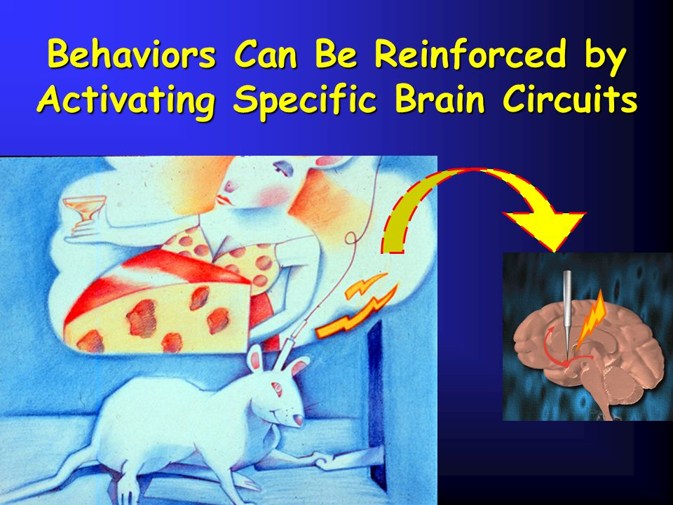 Behaviors Can Be Reinforced by Activating Specific Brain Circuits