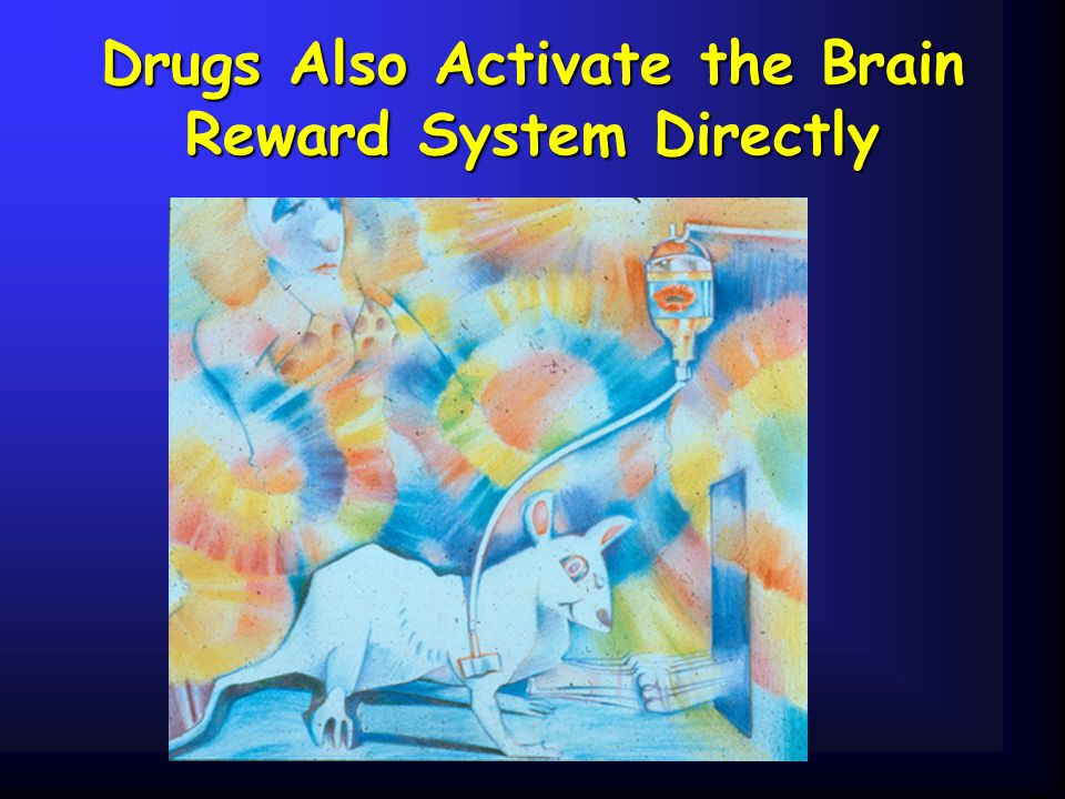 Drugs Also Activate the Brain Reward System Directly