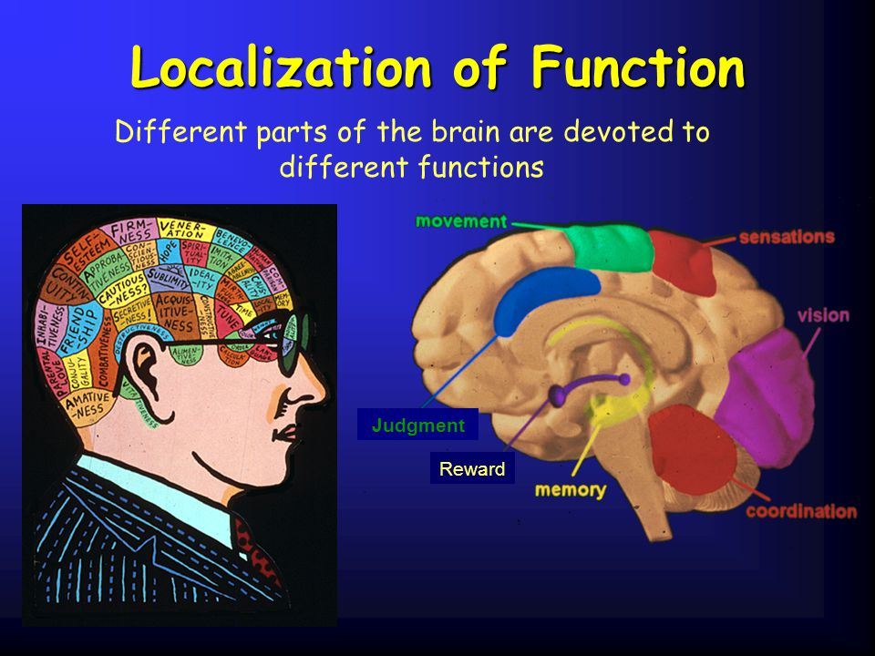 Localization of Function