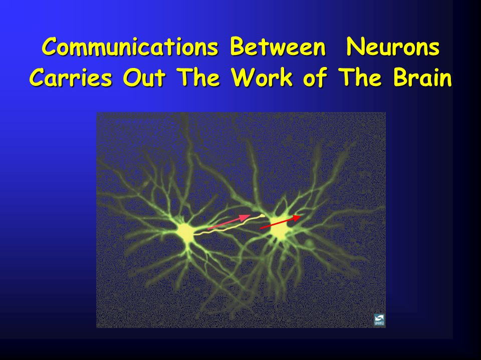 Communications Between Neurons Carries Out The Work of The Brain