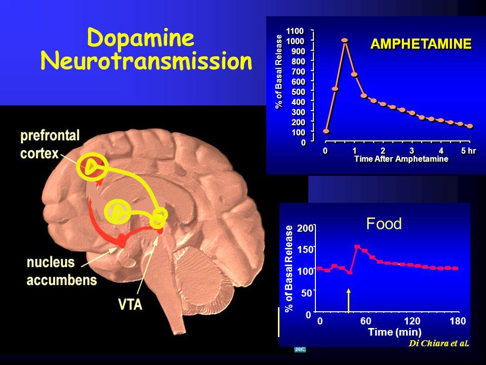 Dopamine Neurotransmission