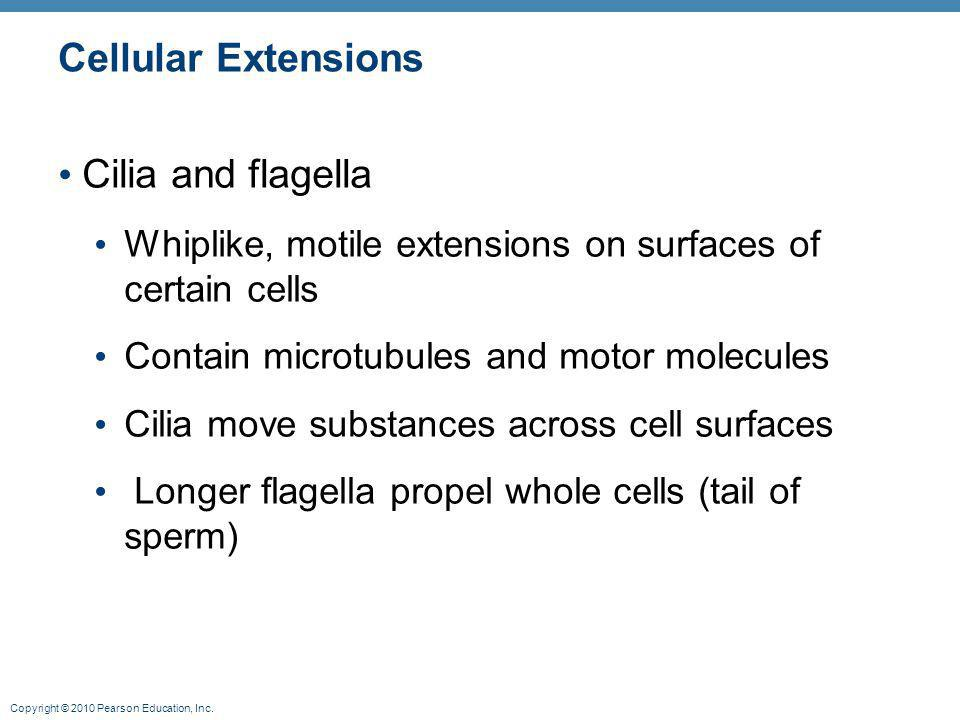 Cellular Extensions Cilia and flagella