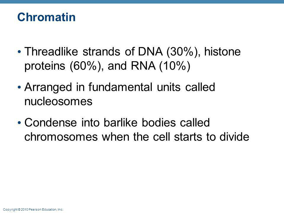 Chromatin Threadlike strands of DNA (30%), histone proteins (60%), and RNA (10%) Arranged in fundamental units called nucleosomes.