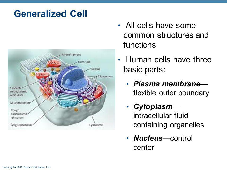 Generalized Cell All cells have some common structures and functions
