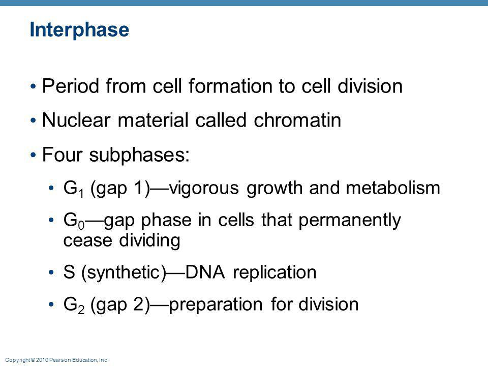 Period from cell formation to cell division