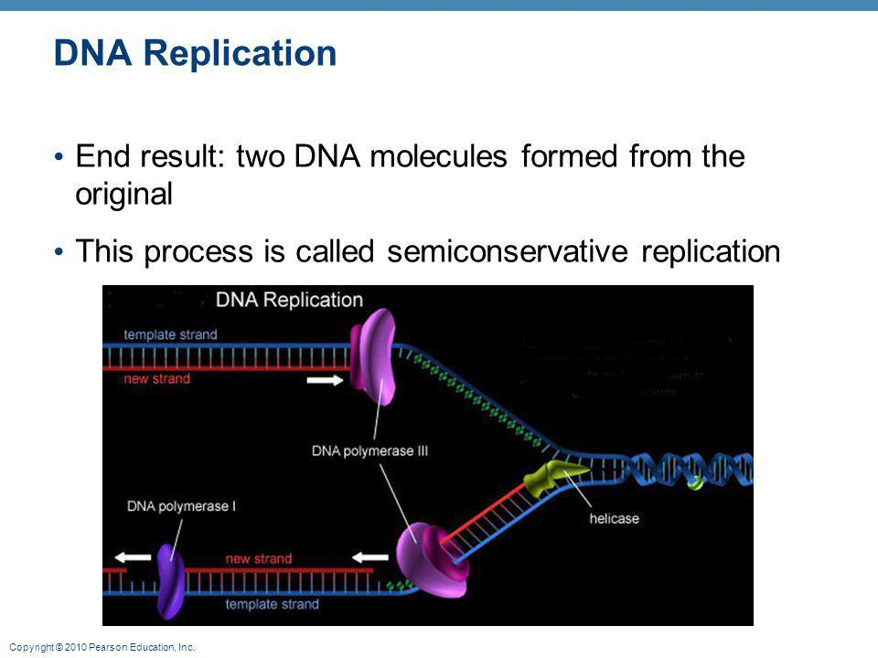 DNA Replication End result: two DNA molecules formed from the original