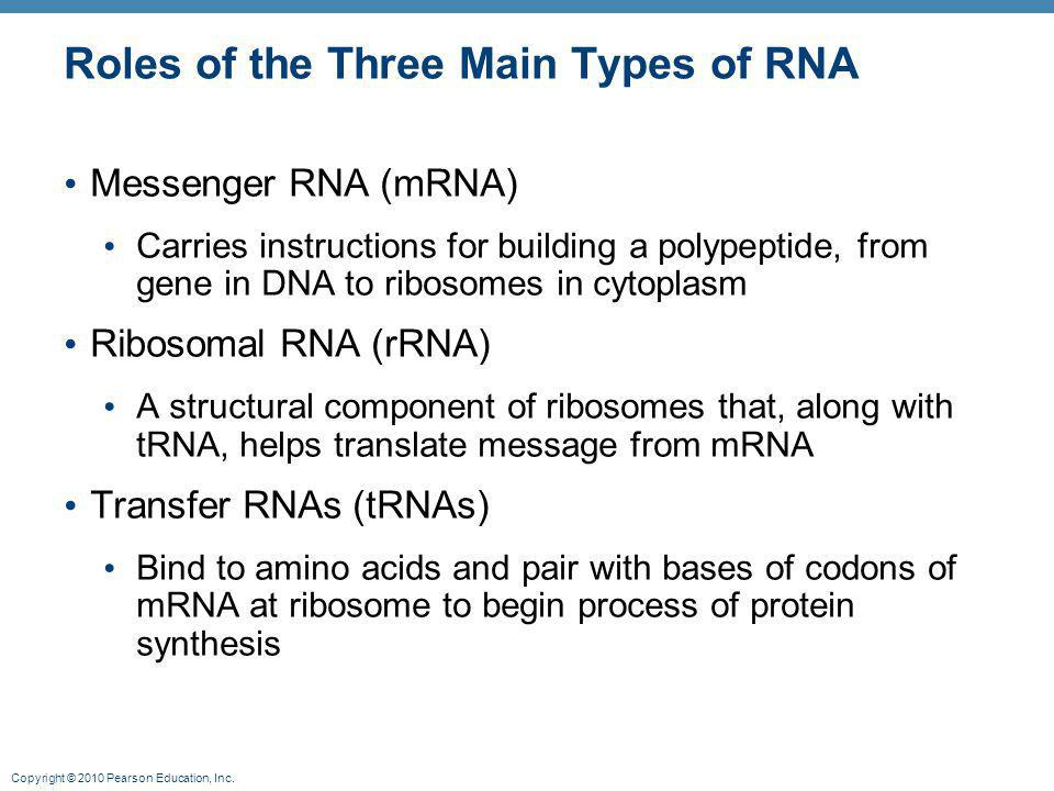 Roles of the Three Main Types of RNA
