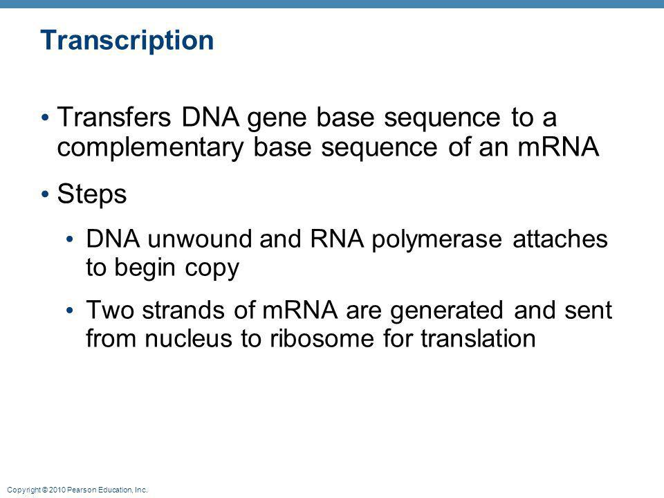 Transcription Transfers DNA gene base sequence to a complementary base sequence of an mRNA. Steps.
