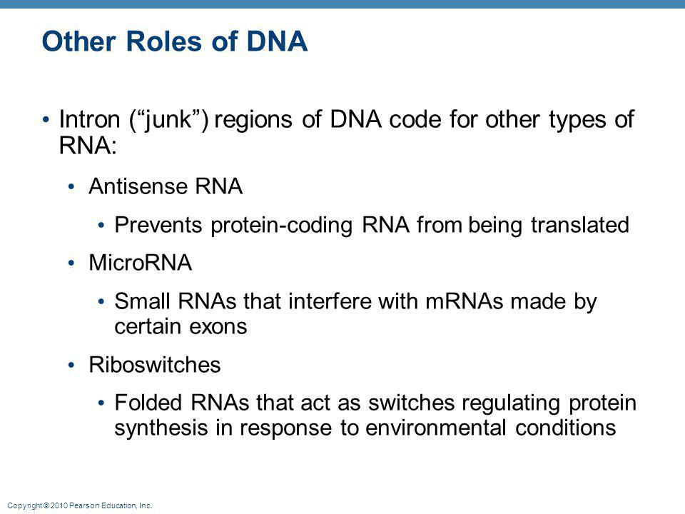 Other Roles of DNA Intron ( junk ) regions of DNA code for other types of RNA: Antisense RNA. Prevents protein-coding RNA from being translated.