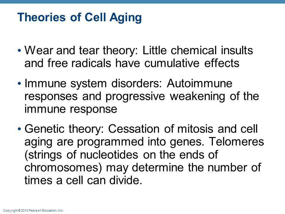 Theories of Cell Aging Wear and tear theory: Little chemical insults and free radicals have cumulative effects.