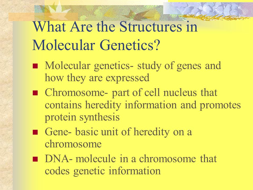 What Are the Structures in Molecular Genetics